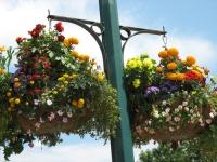 1201892828_sussex_flowers